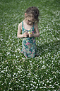 Little girl kneeling on meadow with scattered apple blossoms holding daisies in her hands - OPF000056