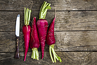 Row of kitchen knife and four red radishes - SARF001781