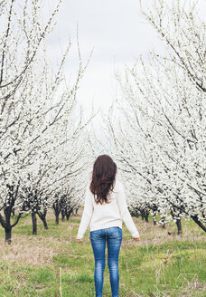 Back view of woman standing in front of orchard with white blossoming trees - BZF000148
