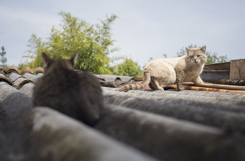 Two cats on a roof - RAEF000185