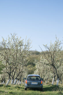 Car driving between blossomong fruit trees on a meadow - BZF000143