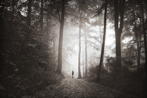 Man walking on forest track in morning mist - DWI000507