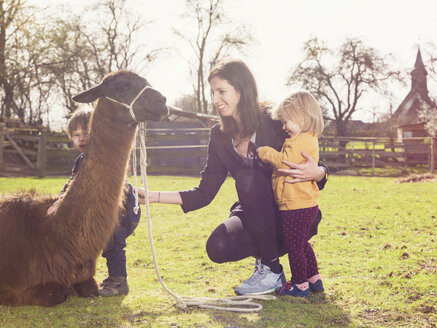 Mother and her little children with a llama on a paddock - TAMF000186