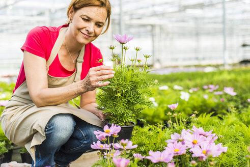 Woman in nursery examining flower - UUF004366