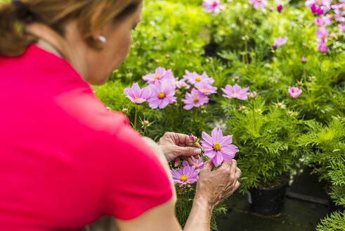 Woman in nursery examining flower - UUF004369