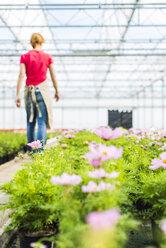 Woman walking in greenhouse of a nursery - UUF004373