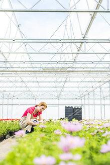 Woman in nursery examining flowers - UUF004376