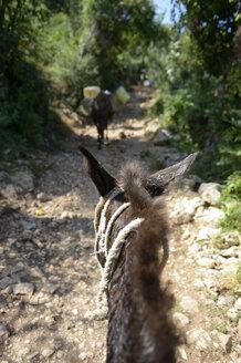 Haiti, pack mule on stony way - FLKF000612