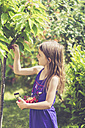 Little girl harvesting cherries - SARF001838