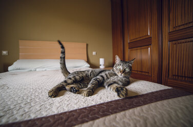 Tabby cat lying on the bed - RAEF000204