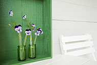 Horned violets standing in used glass tubes of vanila beans - GIS000119