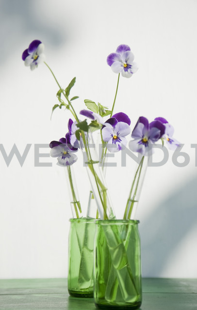 Horned violets standing in used glass tubes of vanila beans - GIS000120