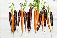 Row of carrots and Purple Haze on white cloth - SBDF002024