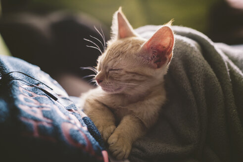 Tabby kitten sleeping on the lap of a woman - RAEF000207