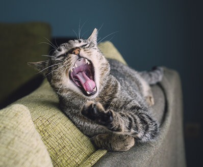 Portrait of yawning cat lying on the backrest of a couch - RAEF000209