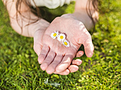 Hand of woman holding daisy blossoms - TAM000086