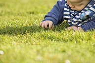 Baby boy lying on a meadow exploring the grass - TAM000133