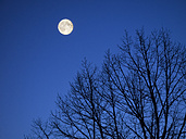 Full moon at Blue Hour - KRP001463