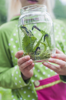Germany, Girl holding glass with caterpillar of peacock butterfly - MJF001554