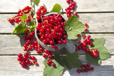 Jug of red currants - YFF000444