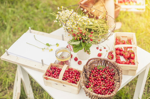 Chamomile flowers, woodland strawberries and red currants on a table - MJF001612