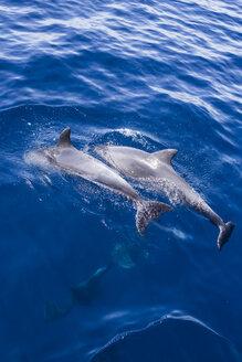 Spain, Andalusia, Bottlenose Dolphins, Tursiops truncatus - KBF000334