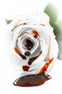 White rose blossom with fresh blood - MIDF000486