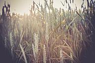Germany, Baden-Wuerttemberg, wheat field - LVF003638