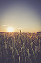 Germany, Baden-Wuerttemberg, Wheat filed against the evening sun - LVF003644