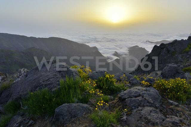 Portugal, Madeira, Sunrise - FDF000110