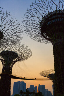 Singapore, Gardens by the bay, Supertree Grove - EA000003