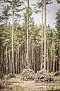 Trees of a coniferous forest - ASC000198