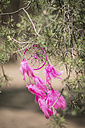 Pink dream catcher hanging on a twig - ASCF000200
