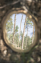 Mirror image of trees in the woods - ASC000209