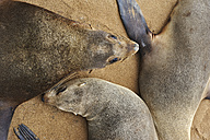 Namibia, Cape Cross, three cape fur seals lying on sandy beach - MBF001224