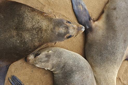 Namibia, Cape Cross, three cape fur seals lying on sandy beach - MBF001224
