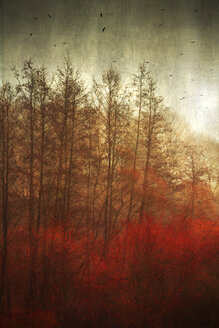 Germany, near Wuppertal, Broad-leaved trees in autumn - DWIF000529