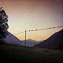 Italy, Lombardy, Mountains, mountain pasture and birds at sunset - DWIF000532
