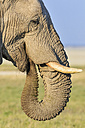 Namibia, Etosha National Park, profile of African elephant - FOF008128