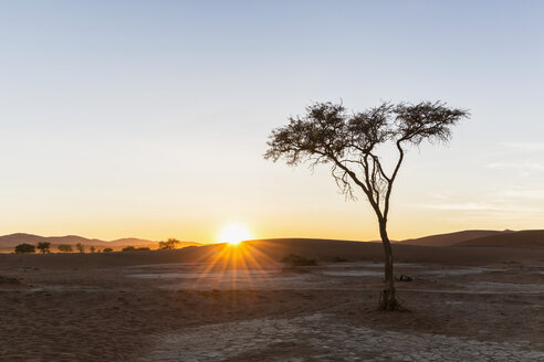 Africa, Namibia, Namib Desert, View to desert dunes and acacia at sunrise, Namib-Naukluft National Park - FOF008156