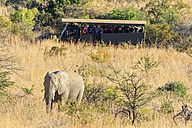 South Africa, North West, Bojanala Platinum, African elephant watched by tour group at Pilanesberg Game Reserve - FOF008190