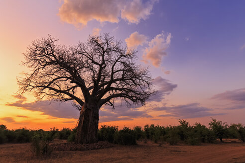 Zimbabwe, Masvingo, Gonarezhou National Park, baobab at sunset - FOF008221