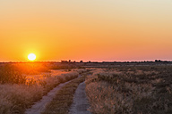 Botswana, Kalahari, Central Kalahari Game Reserve, piste at sunrise - FOF008268