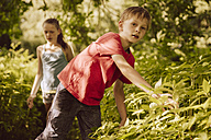 Two children walking through Himalayan Balsam in a forest - MFF001904