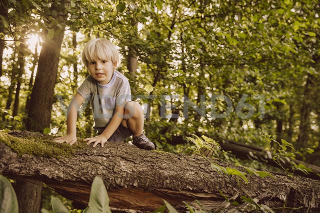 Boy climbing along fallen tree in forest - MFF001924