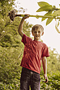 Boy holding up torn out Himalayan Balsam - MFF001930