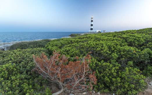Spain, Balearic Islands, Menorca, view of lighthouse at Cap d'Artrutx - MGOF000317