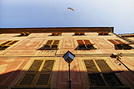 Italy, Liguria, Sestri Levante, seagull at house front - DIKF000158