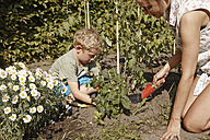 Mother and son working in vegetable garden - RHF000990