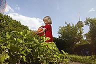 Little girl watering plants in garden - RHF001016
